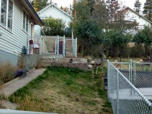2017-chain-link-fence-006